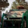 Orso a spasso nella foresta sul camion dei rifiuti 5
