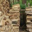 Riesci a trovare il gatto tra i ciocchi di legno2