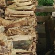 Riesci a trovare il gatto tra i ciocchi di legno