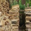 Riesci a trovare il gatto tra i ciocchi di legno3