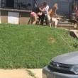 Rissa tra vicini, anche i cani partecipano 2