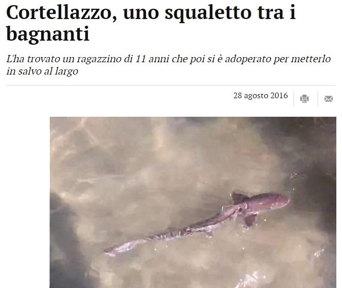 Squalo tra i bagnanti a Cortellazzo: salvato da ragazzino FOTO