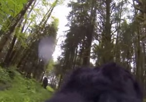 "YOUTUBE Cane con GoPro ""scopre"" Bigfoot nel bosco"