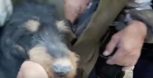 YOUTUBE Terremoto Amatrice, cane estratto vivo dalle macerie