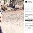 Selfie con i leoni, multato giocatore di cricket indiano3