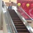 Topo scappa provando a salire sulla scala mobile