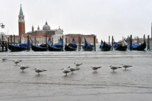 Venezia, falso allarme bomba: due trolley abbandonati