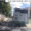 Autospurgo esplode al semaforo: auto ricoperte di feci