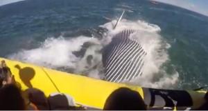 YOUTUBE Canada, incontro ravvicinato con la balena: che spavento!