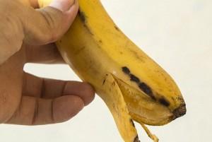 Banane, rischio scomparsa entro 10 anni: mangiate da fungo patogeno