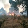 Canarie in fiamme: bruciato isola La Palma 3