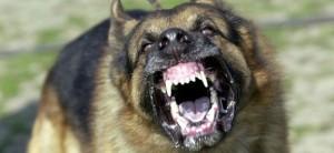 Guarda la versione ingrandita di Massa: bimbo 4 anni azzannato al volto da un cane, ferite a occhio