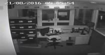YOUTUBE Australia: vandali lanciano coccodrilli in una scuola