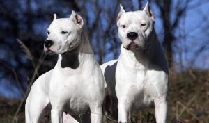 Guarda la versione ingrandita di Catania, bimbo di un anno e mezzo morto sbranato da 2 cani