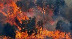 L'incendio in Sardegna