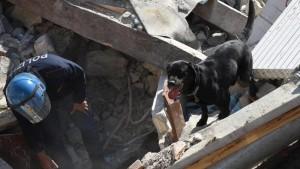 Terremoto Centro Italia: labrador Leo e i colleghi eroi a quattro zampe