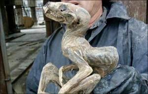 Guarda la versione ingrandita di Siberia, misteriosa mummia nella miniera di diamanti.
