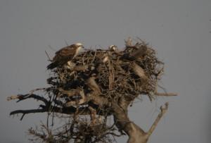 Giornalista rischia 5 anni di carcere per aver scritto sui nidi di falco