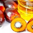 Olio di palma import export – la produzione di olio di palma nel mondo