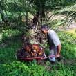 Olio di palma e ambiente – la produzione di olio di palma sostenibile