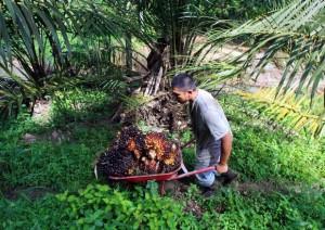 Guarda la versione ingrandita di Olio di palma nocivo per l'ambiente? Tutto quello che devi sapere