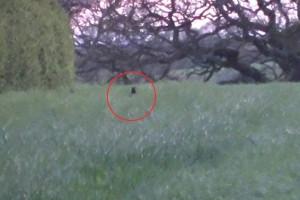 Una bestia nera avvistata nel Lake District Park in Cumbria, nord-ovest dell'Inghilterra
