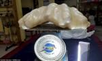 """Pesca perla da 34 chili e 100 milioni ma la tiene sotto al letto come """"portafortuna"""" finché…"""
