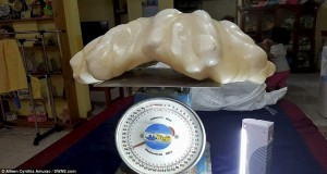 Guarda la versione ingrandita di Pesca perla da 34 chili ma la tiene sotto al letto come