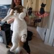 Samson gatto più grande del mondo6