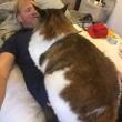 Samson gatto più grande del mondo3