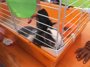 Terremoto, il coniglietto Trilli estratto vivo ad Amatrice