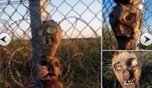 Ungheria: teste di maiale per spaventare migranti. Idea partito Orban