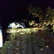 Mirandola (Modena), tromba d'aria nella notte: alberi sradicati FOTO 4