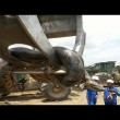 Anaconda lunga 10 metri spostata con escavatore
