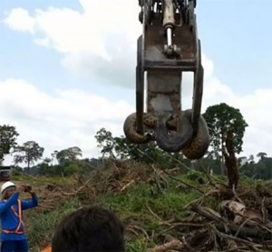 Guarda la versione ingrandita di YOUTUBE Anaconda lunga 10 metri spostata con escavatore: pesa 400 kg