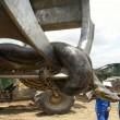 Anaconda lunga 10 metri spostata con escavatore2