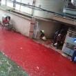 Dacca, festa del sacrificio e monsoni9