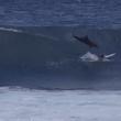 Delfino cade su surfista di 13 anni dopo salto 3