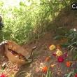 India, si fa mordere sulla lingua da un cobra per sballarsi 7