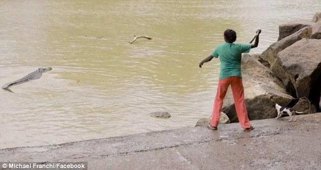 Lancia bastone a coccodrillo e lo colpisce in testa