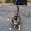 Logan, il gatto super obeso star del web5