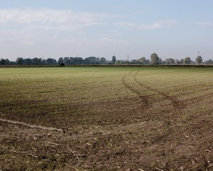 Terra dei Fuochi in Lombardia, perizia: sostanze inquinanti depositate attraverso acque irrigue