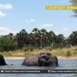 Malawi, troppi elefanti: 500 esemplari trasferiti6