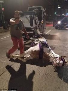 Guarda la versione ingrandita di Manhattan, cavallo collassa in strada per la stanchezza FOTO