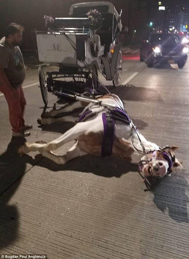 Manhattan, cavallo collassa in strada per la stanchezza2