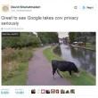 Mucca con il volto oscurato Google Street View difende la sua privacy2