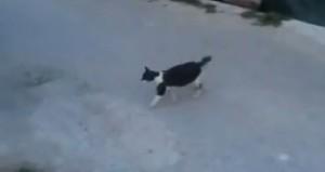 Terremoto Accumoli, mamma gatta porta il cibo ai suoi cuccioli tra le macerie VIDEO