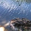 Si lancia nel fiume: la corda è troppo corta e4