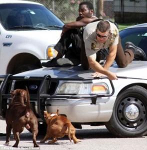 Uomo spaventato da pitbull, poliziotto lo salva così