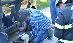 Terremoto Amatrice, il gatto Rocco estratto vivo da macerie dopo 32 giorni FOTO
